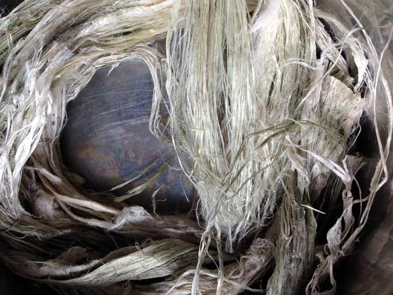 """Entscheidend für das Ausspinnen feiner Garne ist die Befreiung der Hanffaser von den """"Pflanzenleimen"""", den Pektinen."""